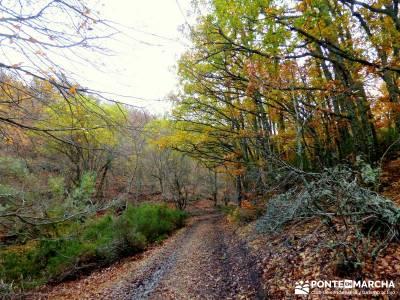 Hayedo Tejera Negra - Fiesta Almudena; calzado trekking sierra norte de madrid gente para viajar